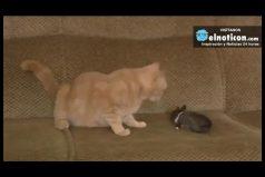 Esta gata mamá adoptó a un conejo y le hizo un lugar entre sus cachorros