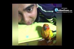 When Your Parrot Is Gangsta