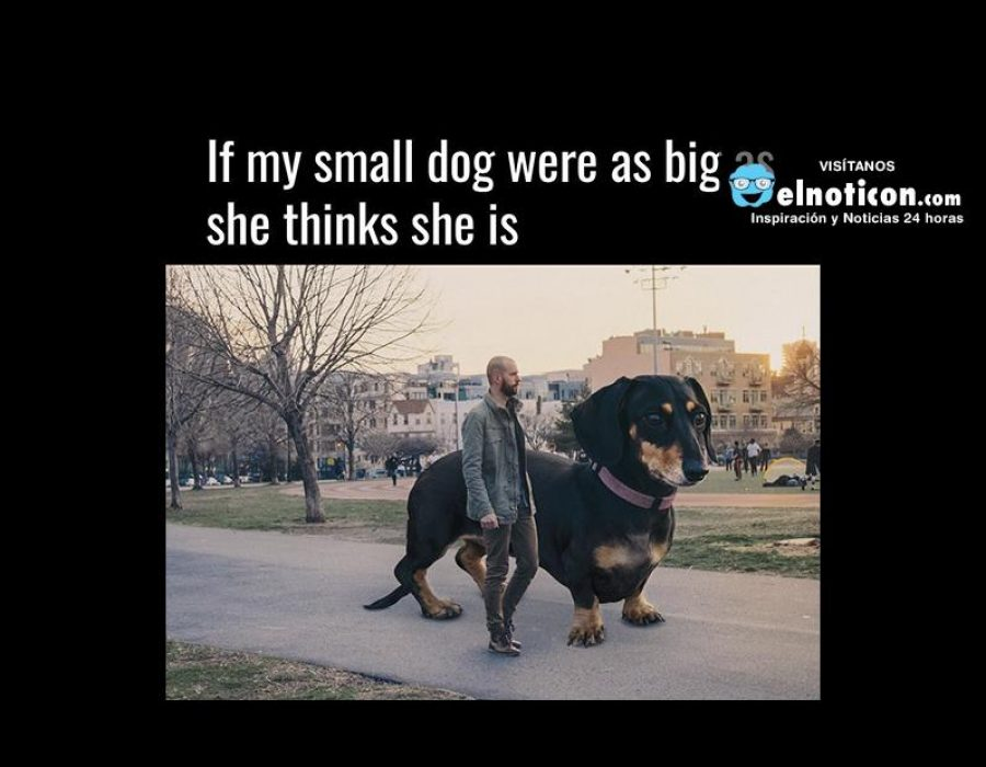If my small dog were as big as she thinks she is