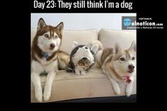 Day 23: They still think I'm a dog
