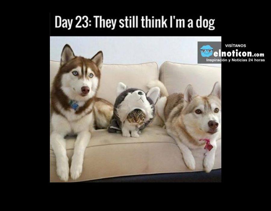 Day 23: They still think I'm a dog