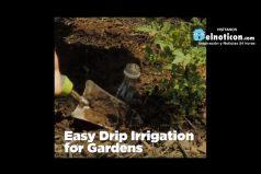 Easy Drip Irrigation Gardens