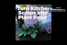 Kitchen Scraps into Plant Food