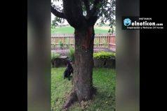 Squirrel Mugs Off Dog