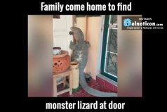 Family come home to find monster lizard at door