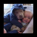 Bebé en la cuna con su perro