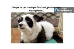 Compre un oso panda por Internet…