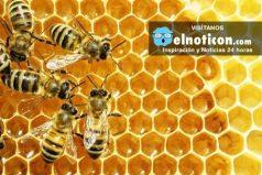 ¿Qué pasaría si se extinguieran las abejas? Quedarás con la boca abierta