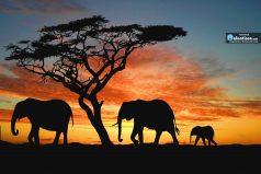 ¿Te gustan los elefantes? Te contamos curiosidades sorprendentes de estos bellos gigantes