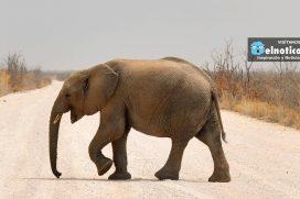 Esta niña le dicen: 'la domadora de elefantes' ¡Increíble!