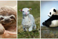 10 animales bebés que llenarán tu día de ternura ¡Aawww!