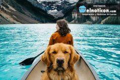 """Conoce a Aspen el """"perrito viajero"""" ¡Te enamorarás!"""