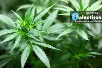 Expedida primera licencia para producir medicamentos a base de cannabis