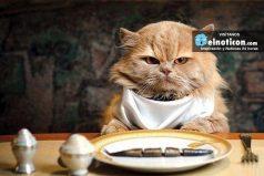 ¿Amas los gatos? 5 alimentos que tu gatito jamás debe comer