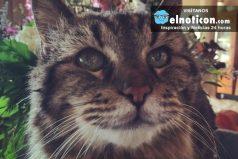 Les presentamos a Cordurpy, el gato más viejo del mundo