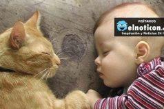 Gatos y bebés un amor 100% contagioso ¡Quedarás enamorado!