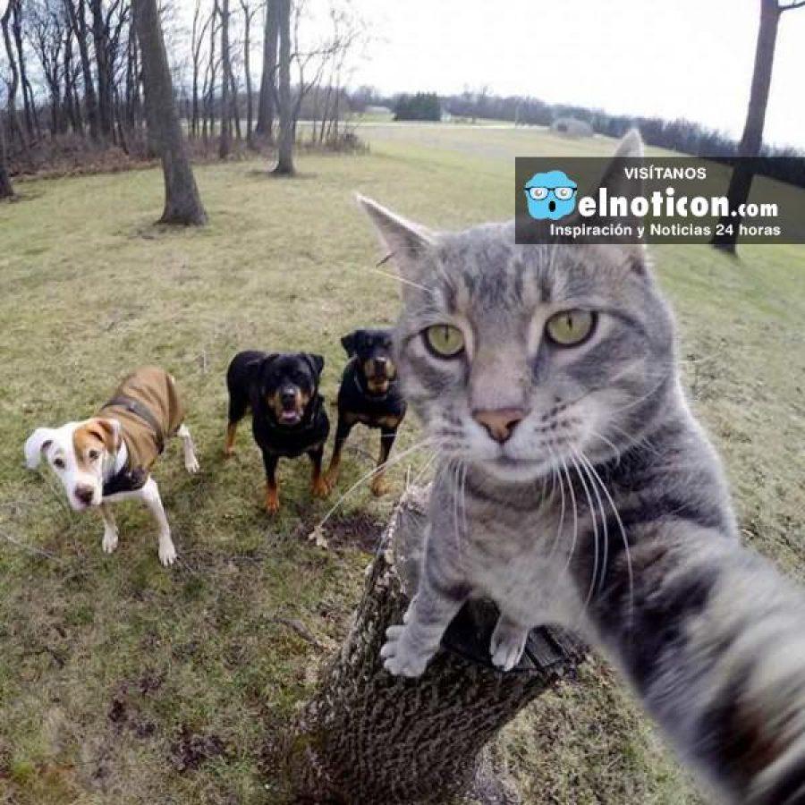 ¿Sabías que si te tomas muchas selfies quizás tengas problemas mentales? ¡Menos celular más vida real!