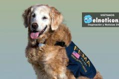 Un homenaje a Bretagne, la última rescatista canina sobreviviente de los atentados a las Torres Gemelas