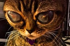10 Increíbles gatos que no creerás que existen ¡Me encantó el 8!