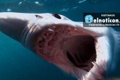 Top 10 Weird Sharks