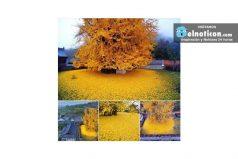 El 'árbol de oro'