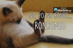 No, yo no ronco…