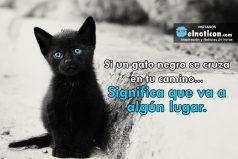 Si un gato negro se cruza en tu camino