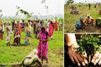 India planta 50 millones de árboles en un día y bate el récord mundial