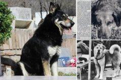 Perros fieles hasta después de la muerte