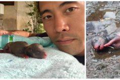 """La historia de """"Baby Blu"""", la cachorrita que salvó su vida después de que quemaran a su madre"""