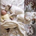 Bebés durmiendo con sus mascotas