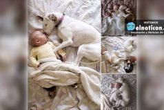 Una siesta compartida