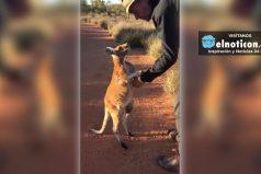 Este canguro no quiere irse sin su despedida
