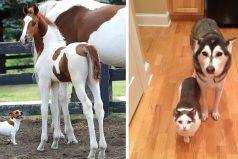 Estos animales son hermanos pero de distintos papás