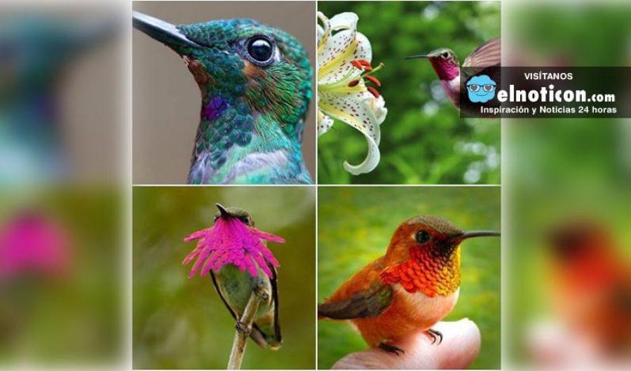 La belleza única de los colibríes