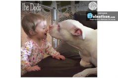 Esta pequeña niña sorda usa sus manos para hablar con su perro