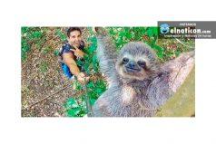 Una en un millón: esta 'selfie' no sería nada sin un oso perezoso fotogénico