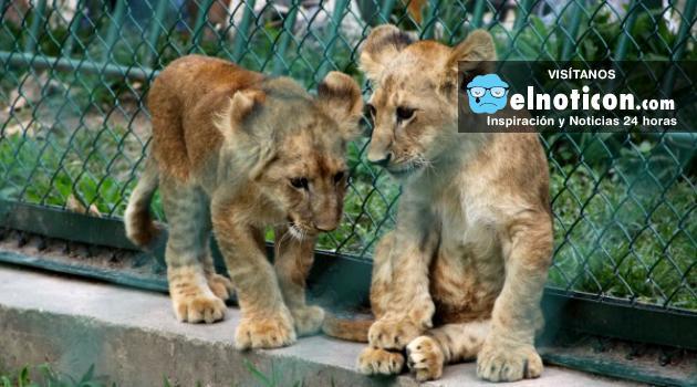 Animales de zoológicos en Venezuela también sufren la crisis alimentaria