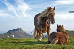 El caballo roquero que es viral en YouTube