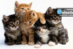 Ver gatos te puede hacer más feliz, según estudio ¡Son lo más bello del mundo!