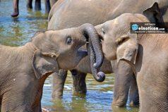 Así reaccionó este pequeño elefante al bañarse por primera vez ¡QUÉ TERNURA!