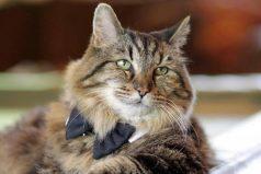 ¡Conoce a Corduroy, el gato más viejo del mundo! Tiene 26 años y fue adoptado de un refugio