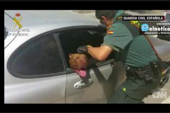 Rescatan a un perro que estuvo a punto de morir encerrado en un vehículo
