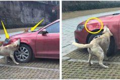 Este perro y sus amigos destrozan el auto de un hombre que lo había golpeado
