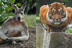 Animales escandalosamente sexys