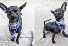 Este perro tiene expresiones faciales más entretenidas que las demuchos actores
