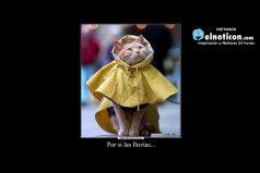 Por si las lluvias