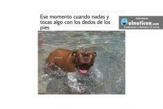 Ese momento cuando nadas…