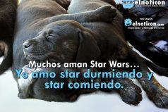 Muchos aman Star Wars…