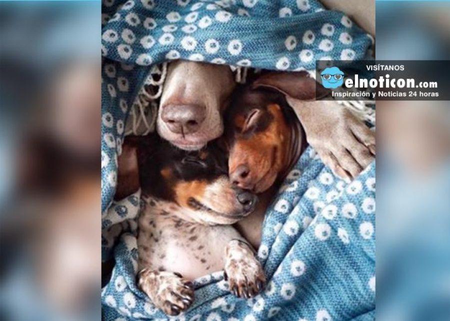 Familia que duerme unida, permanece unida